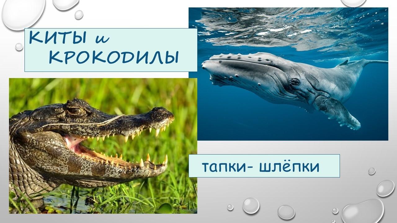 """О. Демьянова. Тапки-шлепки """"Киты и Крокодилы"""""""